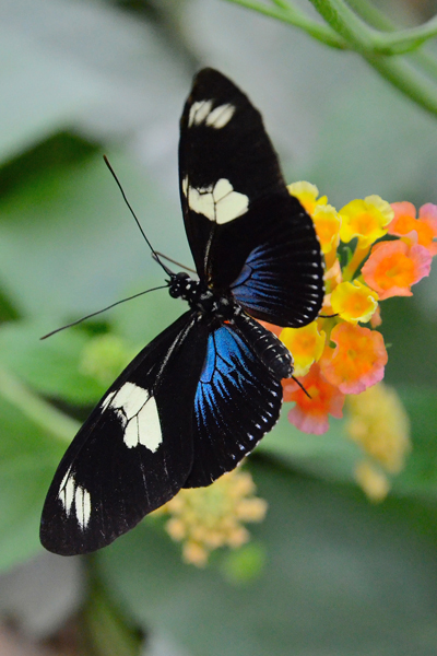 image de papillon exotique
