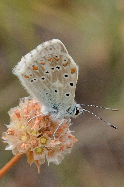 image de papillon français
